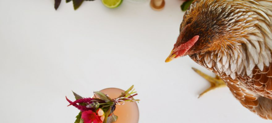 Drinking with Chickens – Garden Gin Cosmo
